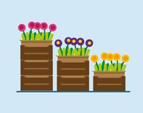 Fleurs dans des boîtes Photos libres de droits