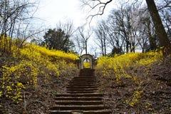 Fleurs dans des chênes de Dumbarton image libre de droits