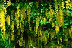 Fleurs dans des jardins de butchart Images libres de droits