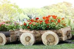 Fleurs dans des pots dans la boîte en bois sur le jardin Images stock