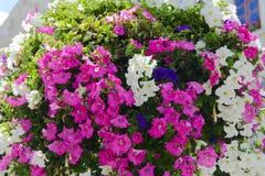 Fleurs dans des pots dans les rues Conception, Image libre de droits