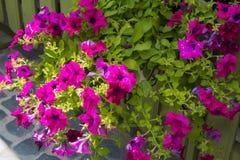 Fleurs dans des pots dans les rues Conception, Photos stock