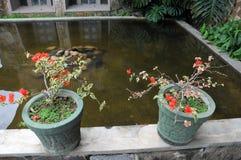 Fleurs dans des pots dans un hôtel sur l'île de la Ceylan Photographie stock libre de droits