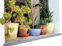 Fleurs dans des pots de fenêtre, île grecque Images stock