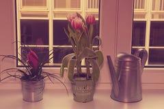 Fleurs dans des pots de fleur et la boîte d'arrosage sur le rebord de fenêtre Rétro effet Photos libres de droits