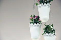 Fleurs dans des pots de jardin accrochant vers le haut du fond blanc Photographie stock
