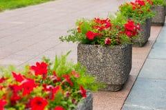 Fleurs dans des pots en pierre dans la ville Image libre de droits