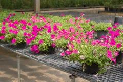 Fleurs dans des pots en vente dans la pépinière d'usines Images libres de droits