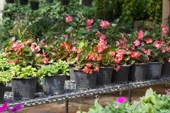 Fleurs dans des pots en vente dans la pépinière d'usines Photos stock