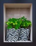 Fleurs dans des pots noirs et blancs rayés Image stock
