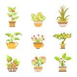 Fleurs dans des pots réglés Photographie stock