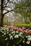 Fleurs dans Keukenhof Photo libre de droits