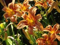 Fleurs dans l'été Photos libres de droits