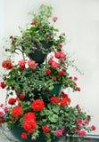 Fleurs dans l'antémémoire-bac Photographie stock