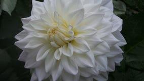 Fleurs dans l'arborétum Images stock