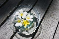 Fleurs dans l'eau image stock