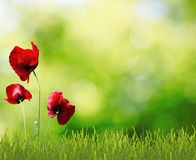 Fleurs dans l'herbe Image libre de droits