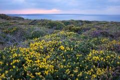 Fleurs dans la Bretagne, France photos stock