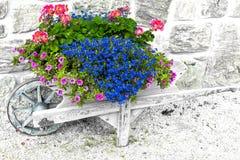 Fleurs dans la brouette Photographie stock libre de droits