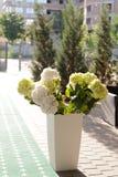 Fleurs dans la cour Image stock