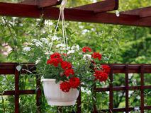 Fleurs dans la cour Images libres de droits