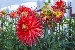 Fleurs dans la fin d'été Images libres de droits