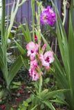 Fleurs dans la fin d'été Photos stock