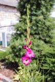 Fleurs dans la fin d'été Photo stock