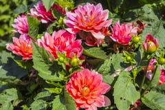 Fleurs dans la fin d'été Photographie stock libre de droits