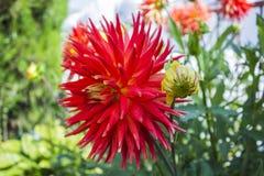 Fleurs dans la fin d'été Image libre de droits