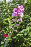 Fleurs dans la fin d'été Photos libres de droits