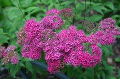 Fleurs dans la fleur Images stock