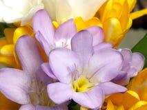 Fleurs dans la fleur Image libre de droits