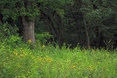Fleurs dans la forêt Photos libres de droits