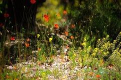 Fleurs dans la forêt Photographie stock libre de droits