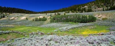Fleurs dans la forêt nationale de mouflon d'Amérique photographie stock