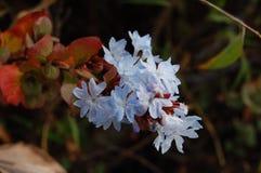 Fleurs dans la forêt tropicale Photos libres de droits