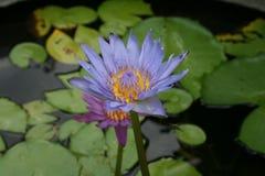 Fleurs dans la forêt tropicale Photo libre de droits