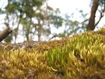 Fleurs dans la forêt tropicale Photographie stock