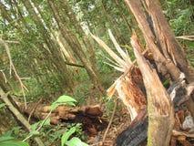 Fleurs dans la forêt tropicale Images stock