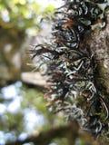 Fleurs dans la forêt tropicale Image libre de droits