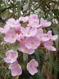 Fleurs dans la forêt tropicale Images libres de droits