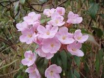 Fleurs dans la forêt tropicale Photo stock