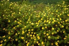 Fleurs dans la forêt tropicale du Bornéo Photos stock
