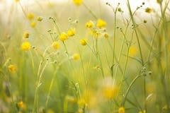 Fleurs dans la lumière de coucher du soleil Images stock