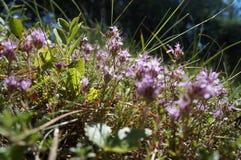 Fleurs dans la mousse Photo libre de droits