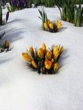 Fleurs dans la neige, Vancouver Photographie stock