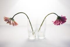 Fleurs dans la querelle Image libre de droits