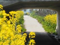 fleurs dans la route Photo stock