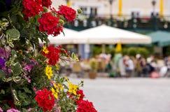 Fleurs dans la scène de cour Photo stock